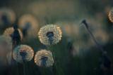 Пролет ; comments:32