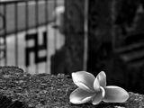 Символи на мир и смърт в хармония ; comments:8