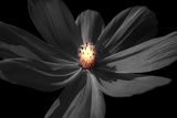 Flower ; comments:7