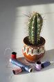 Етюд с кактус ... ; comments:16