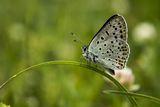 Пеперудено спокойствие ; comments:7