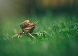 Snail ; comments:12