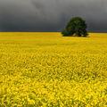 Класически жълто ; comments:93