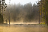 Мъгливо утро ; comments:44