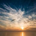 За изкуството да летиш и още нещо.. ; comments:30