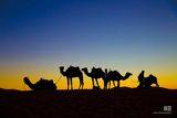 Залез в Сахара ; comments:14