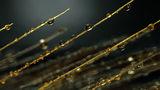Златни капки ; comments:11