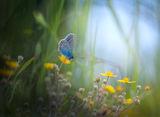 В малкия свят на тревите2 ; comments:51