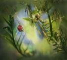 В малкия свят на тревите3 ; comments:29