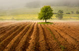 Пушеща земя ; comments:59