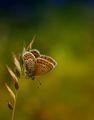 Пеперуда ; comments:110