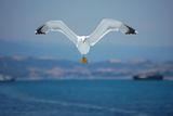 Уморени криле ; comments:13