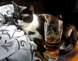 Oставете ме на бира ; comments:23