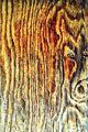 """...""""коне от впряга  на слънчевия бог на бурите"""" ; comments:20"""