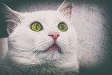 Наблюдавам те ... ; comments:4