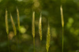 no name ( ID=1999206 ) ; Comments:4