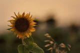 На върха на Лятото... ; comments:22