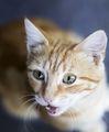Малко коте.... ; comments:1