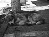 Улично кученце ; comments:1