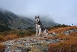 Моят спътник в планината ; comments:9
