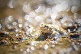 Слънце, жаба и вода ; comments:26