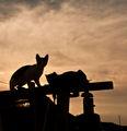 класически залезен кич с котки ; Comments:21