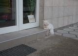 Затворено ! Май трябваше да си хвана мишка ! ; comments:15