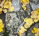 Коте в есента ; Comments:19