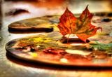 Есенно ; comments:7