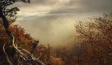 Мъгливо утро ; comments:54