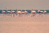 колко фламингота има на снимката :) ; comments:19