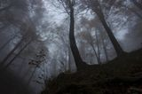 Загадъчна гора ; comments:16