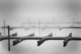 ...призрак сякаш — в сивата мъгла стърчи... ; comments:8