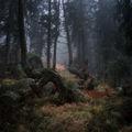 Из Тайнствената гора ; Коментари:35