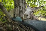 шарена ограда и магаре ; comments:5