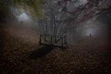 Есенни разходки ; Коментари:33