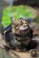 Котешки истории ; comments:5