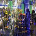 Цветя на цюрихската гара ; Comments:8
