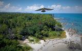 Сокол в небето на Борнео ; Comments:7