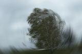 Вятър! ; comments:18