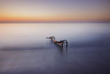 Загубени в морето ; comments:15