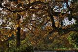 Листопад в римската горичка на Оскар Райнхард ; Comments:2