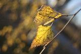 Есенно вдъхновение II ; comments:12