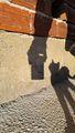 Котка гледа смартфон. ; comments:8