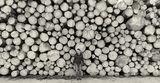Дървесина ; Коментари:15