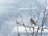 Зима е... ; Коментари:31