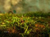 Малък зелен свят ; comments:1