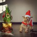 Весели празници :) ; comments:25