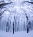Приказки от гората ; comments:32