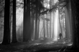 По светлината... ; comments:50